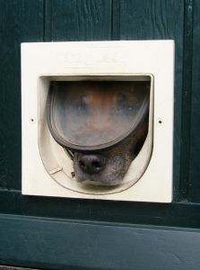 Pet Storm Doors